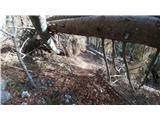 Javorca(Golte)lovska pot pod Travatnco lepo očiščena in prehodna