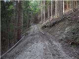 Koprivna (Šumel) - govca_olseva