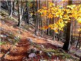 Turska goradel poti po gozdu