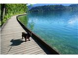 Bled in okolica - Zanimivosti in kuceljci..- Sprehod ob jezeru