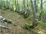 Mali in Veliki Snežniknarava tudi drevesa oblikuje po svoje