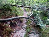 Kotovo sedlonekaj ovir na poti skozi gozd