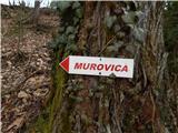 Kamnica - murovica
