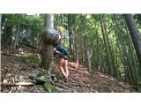 Javorca(Golte)v Erotičnem gozdu