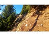 Javorca(Golte)utrinek na Knafljičevem grebenu