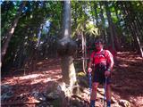 Javorca(Golte)Erotični gozd