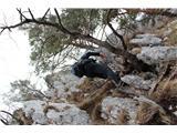 Greben Brezniških pečino, ležat vseeno ni treba, glavo obrnite :)