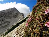 Šitna glava (Nad Šitom glava)Triglavska roža