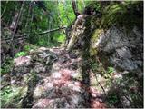 Vodiška planinapo strmem po grapi
