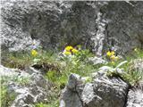 Iz Robanovega Kota čez Črni Hriber na Krofičkotudi avriklji še cvetijo