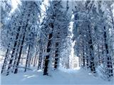 Koča pri Jelenovemu studencuprava zima