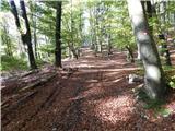 Zalog - planica_vzletisce_gozd