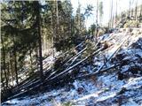 Javorca(Golte)vetrolom na poti proti spomeniku NOB