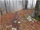 Šenturška Gora - prgozdnik