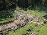 Gozdarska mehanizacija? Kje pa, gorski kolesarji!
