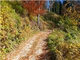 Planina pod Golico - na_peceh_pri_crnem_vrhu