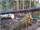 Crete dal CronzSpodnji del poti s kar nekaj podrtimi drevesi..