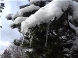 Krasji vrhsneg na drevesih