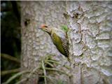 Hranjenje pticpivka
