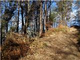 Debenji vrh2019.01.03.09 gozd in pot