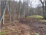 Žamboh (738 m)sledi blago nadaljevanje čez gozd proti sedlu med Žambohom in Sv.Lovrencem