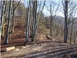 Žamboh (738 m)po gozdni cesti pridemo do sedla pod Lepim hribom