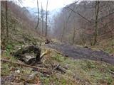 Žamboh (738 m)gozdna cesta preide ob suhi strugi potoka Blejak v slabo vidno stezo po kateri hodimo do izhodišča
