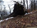 Debenji vrh2019.01.30.13 padlo drevo