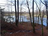 Debenji vrh2019.02.04.07 pritok v ribnik