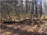 Debenji vrh2019.02.04.08 v gozdu