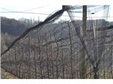 Gomila (352 m)Mimo sadovnjakov.