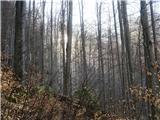 Kamniško sedlo- sončni vzhod2019.04.16.15 sonce za bukvami
