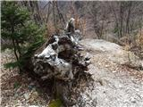 Kamniško sedlo- sončni vzhod2019.04.16.121 korenine padlega drevesa
