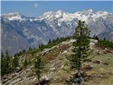 Velika planinajasen je bil v v sredo pogled na gore