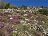 Dleskovec 1965 mbreg nad planino v rožnatem