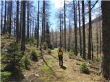 Dleskovec 1965 mprava sprehajalna pot proti planini