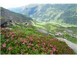 Grosses Wiesbachhorn 3564 mproti zeleni dolini
