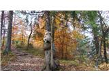 Osolnik 858mPlezalno drevo na poti na Osolnik