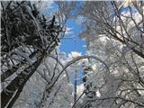 StrelovecŠe preden so se drevesa otresla snega...