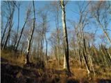 Blegošskozi jesenski gozd