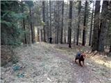 Stegovnikpo poti čez gozd,  je markirana