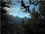 Goli vrh  1787 mnmpogled med drevjem