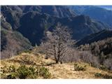 Monte PisimoniOb poti