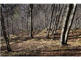 Monte PisimoniTik pred kasarno zavijemo dol  in počasi preidemo v bukov gozd