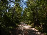 Slavnik - 1028 msenčna cesta čez gozd, ki se ves čas enakomerno vzpenja