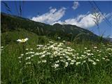 Kriška goraen šopek izpod Kriške gore