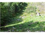 Slovenske planine v vseh letnih časihOčistili so jo kar dobro. Ne verjamem, da so tukaj kaj drugega pasli kot ovce.