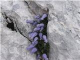 Katera rožca je to?Iz mojih albumov.Niso pa še postavili table konca botanične poti.