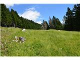 Slovenske planine v vseh letnih časihSklepam, da se  tu pase tudi živina z Zabreške planine.