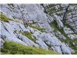 Špik nad nosom (Foronon del Buinz)Kar kmalu zagledamo kozorogovo mladež.